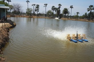 Shrimp farm in South East Asia