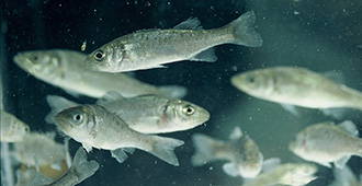 Nutrition and Fish farming