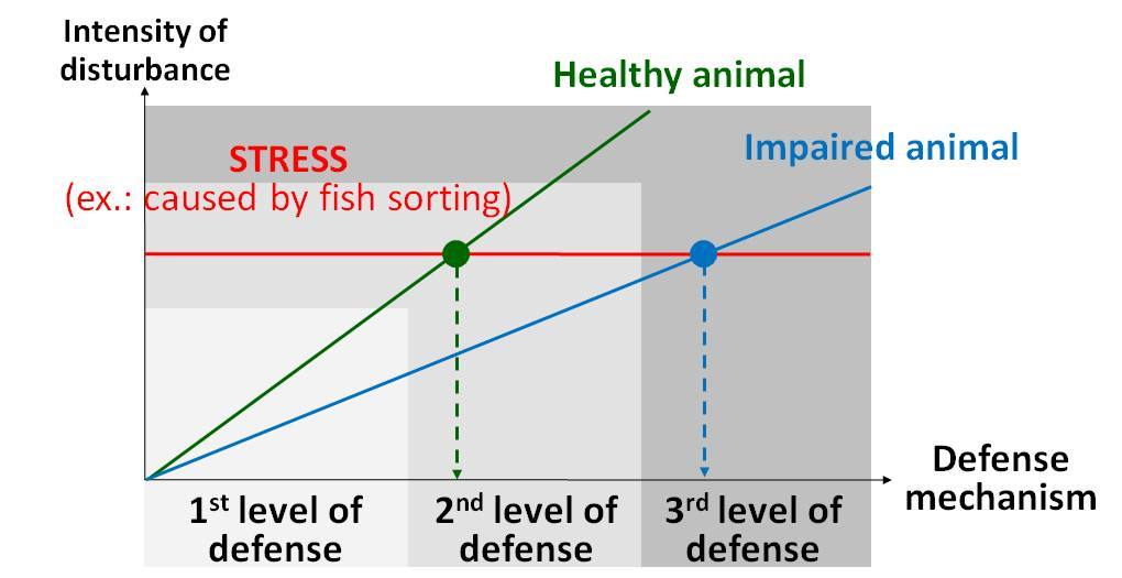 Reducing the Effects of Stress on Farmed Fish