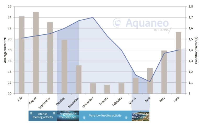 Annual evolution average condition factor Gilthead seabream aquaculture